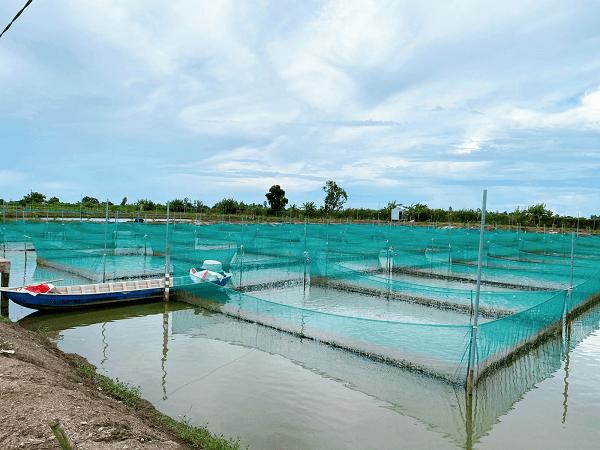 PHAM NGHIA FOOD phát triển thêm vùng nuôi nguyên liệu chuẩn GlobalGAP tại Thới Lai, tạo cơ hội việc làm cho nhiều bà con nơi đây!